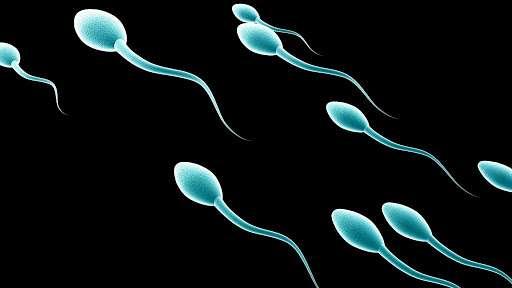 tìm hiểu về tinh trùng
